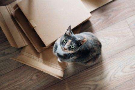 Cat with boxes for Packages On Time and POTVANcom